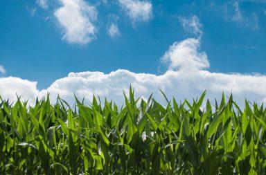 landbouwpercelen